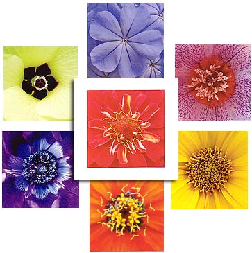 Rainbow Mandalas Notecards (7)<br>by Linda Wiggen Kraft